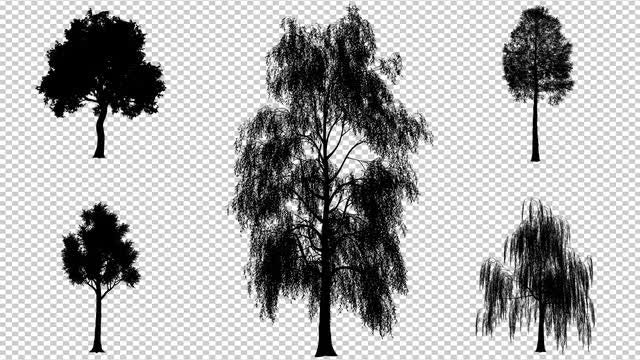 Deciduous Trees Pack: Stock Motion Graphics