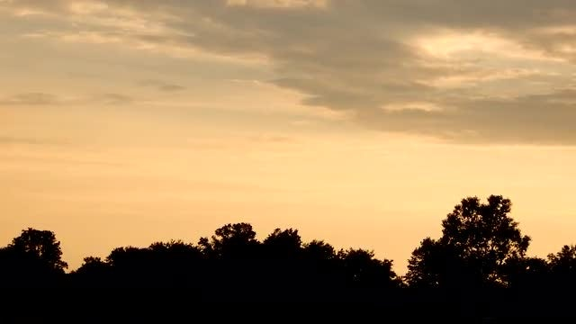 Golden Sunset By Forest Trees Time-lapse: Stock Video