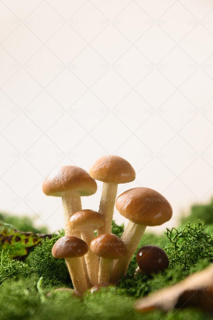 Honey Mushrooms: Stock Photos