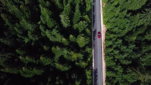 Red Car Driving On Forest Road : Stock Video
