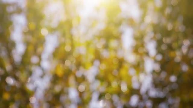 Blurred  Autumn Background: Stock Video