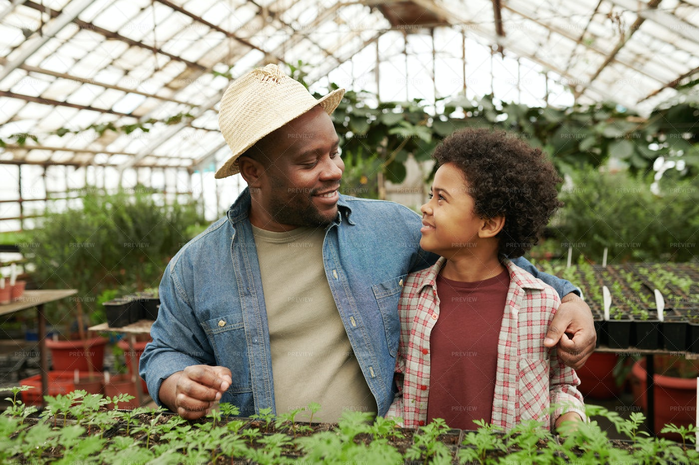Father And Son Working In Greenhouse: Stock Photos