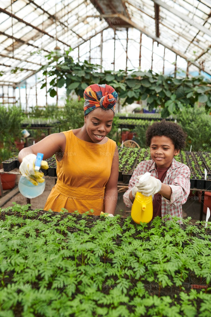 Mom And Son Working In A Greenhouse: Stock Photos