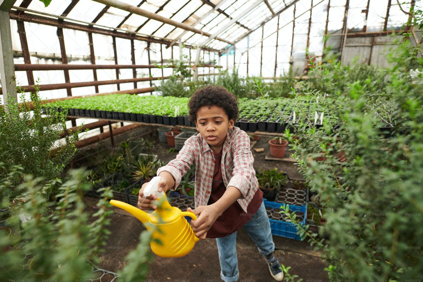 A Kid Watering Plants: Stock Photos