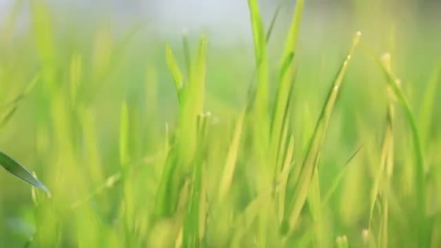 Grass Quivering In The Wind: Stock Video