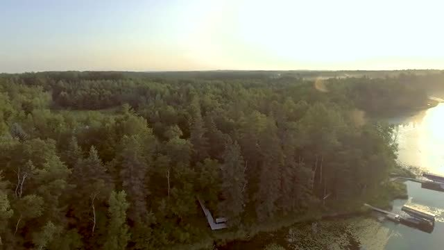 Aerial Shot Of Coastal Forest: Stock Video