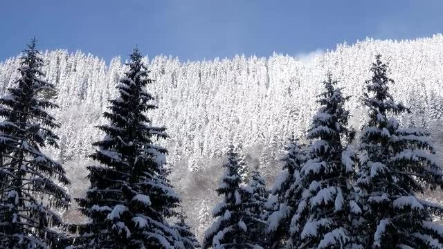 Revealing Shot Of Winter Landscape: Stock Video