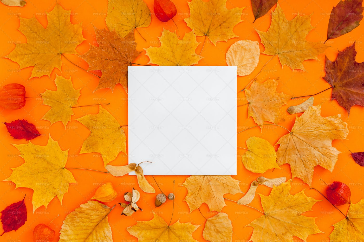 Autumn Leaves And Postcard: Stock Photos