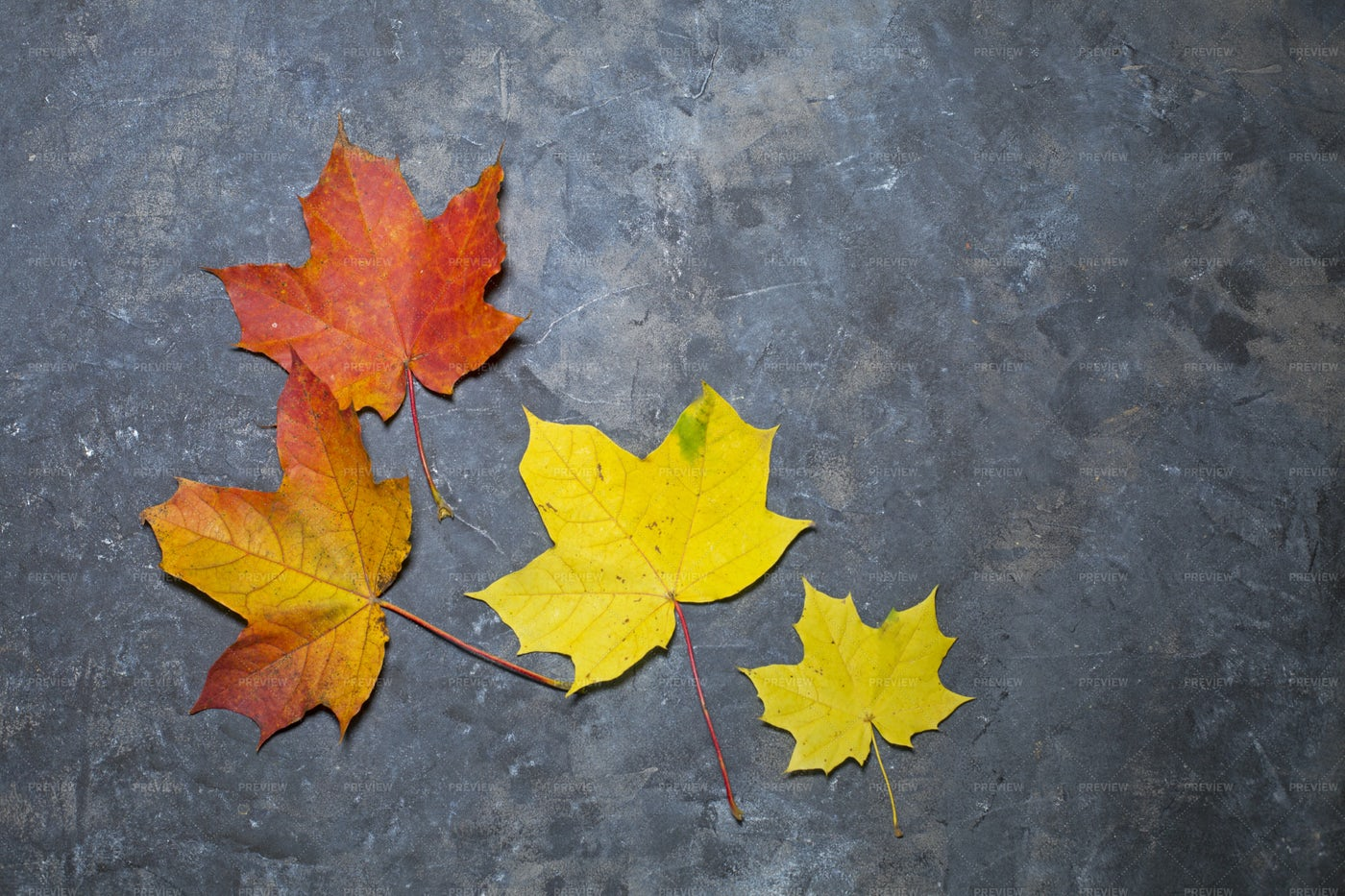 Background With Autumn Leaves: Stock Photos
