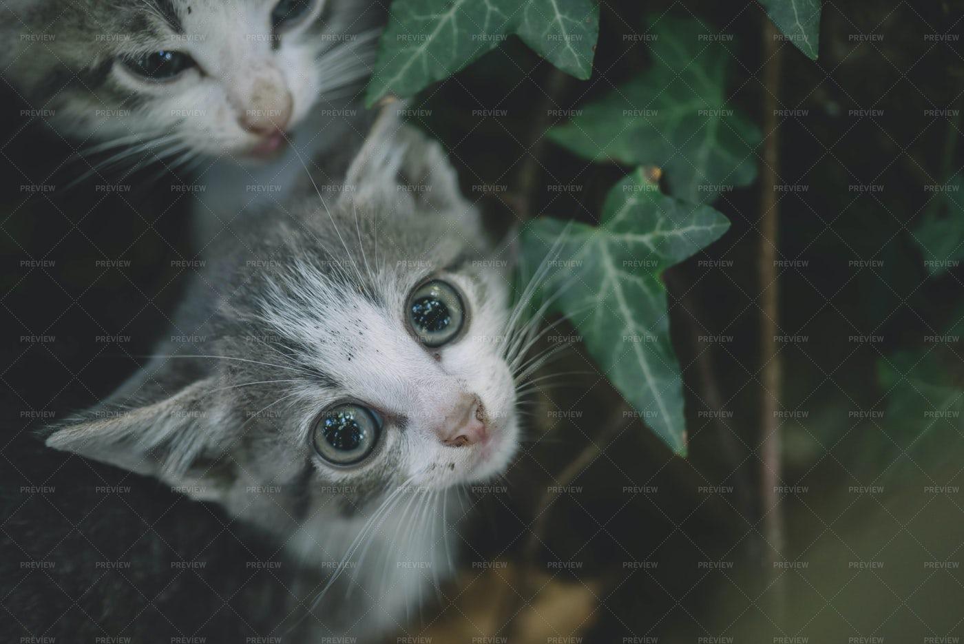 Two Kittens: Stock Photos