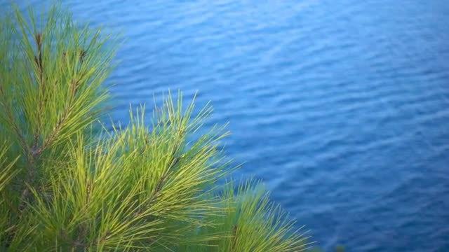 Pine Needles Near Water: Stock Video