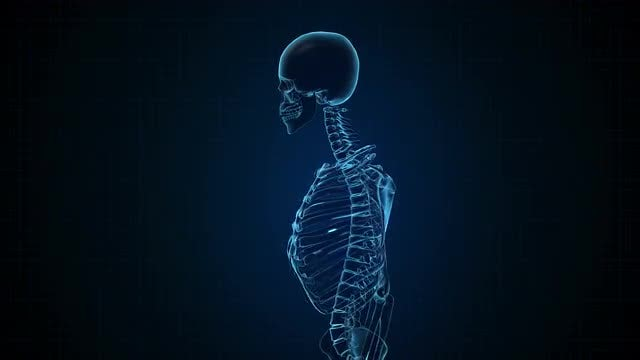 Sci-Fi Human Skeleton In Blue Interface: Stock Motion Graphics