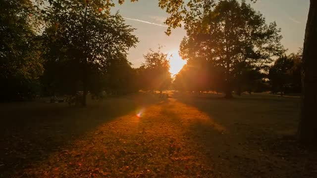Beautiful Sunset In Hyde Park: Stock Video