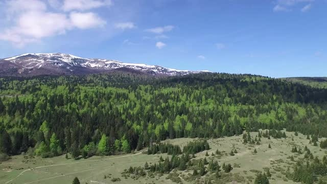 Aerial View Of A Forest : Stock Video