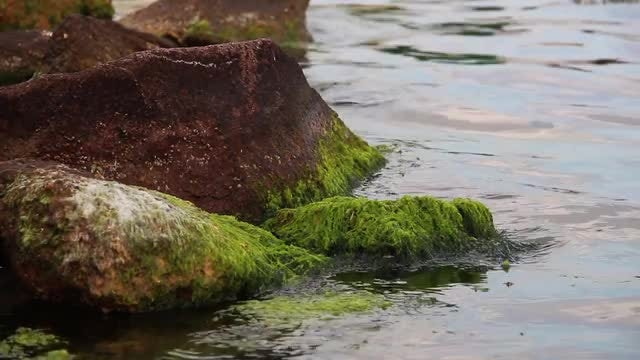 Green Moss On Sea Rock: Stock Video