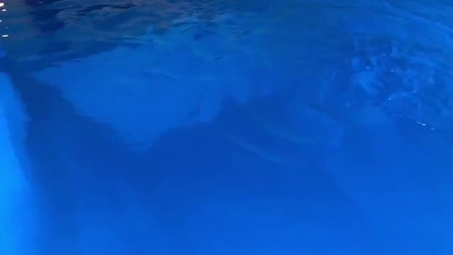 Close-up Shot Of Swimming Pool : Stock Video