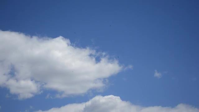 Birds In The Sky: Stock Video
