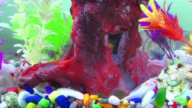 Colorful Aquarium Pack : Stock Video