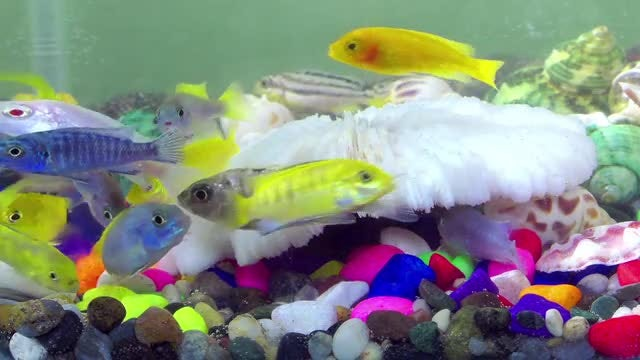 Fishes In An Aquarium Pack: Stock Video
