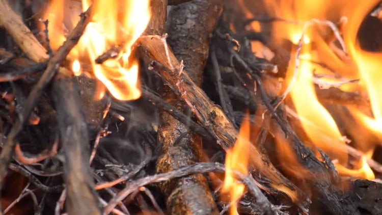 Closeup Of Bonfire: Stock Video