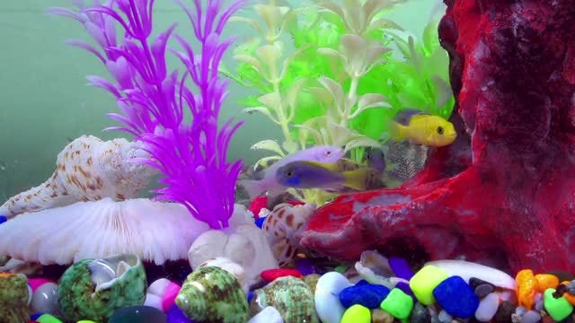 Colored Fish In An Aquarium: Stock Video