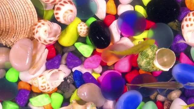 Beautiful Aquarium With Colored Fish: Stock Video