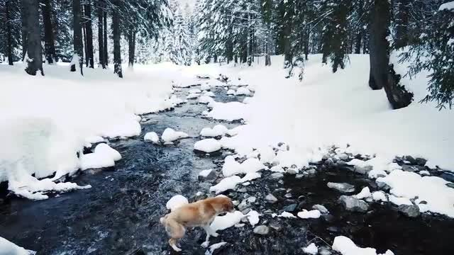 Dog Walking Outdoors During Winter: Stock Video