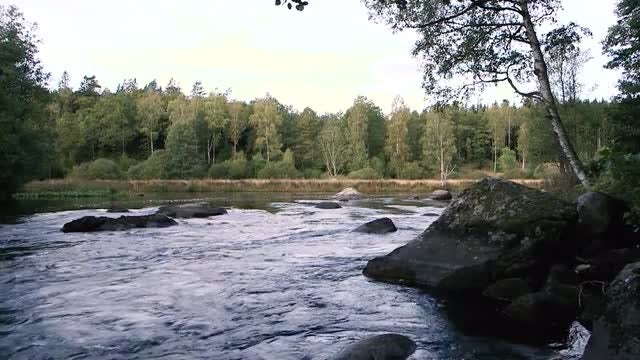 River In A Tropical Forest: Stock Video