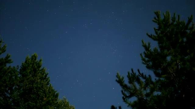 Forest Nightlapse: Stock Video