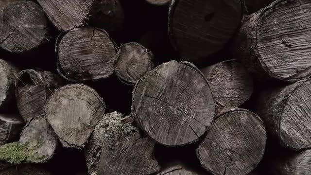Pile Of Old Wood Logs : Stock Video