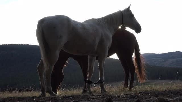 Wild Horses: Stock Video