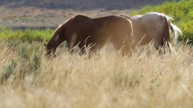 Horses Eating In Slow Motion : Stock Video