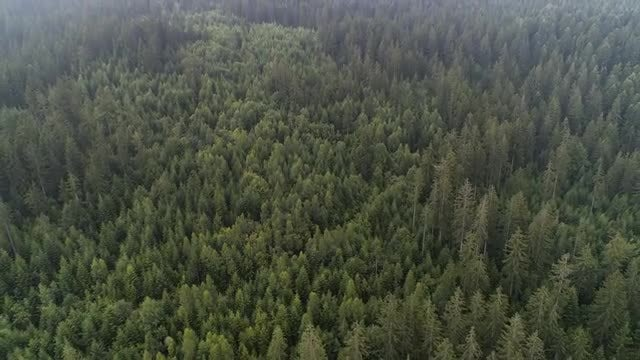 Forest Tree Tops Aerial Shots: Stock Video