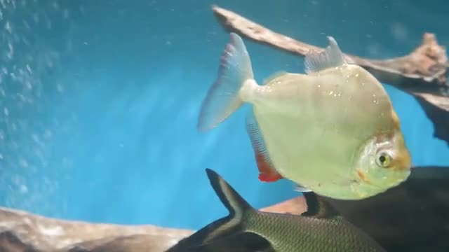 Various Fish In Aquarium: Stock Video