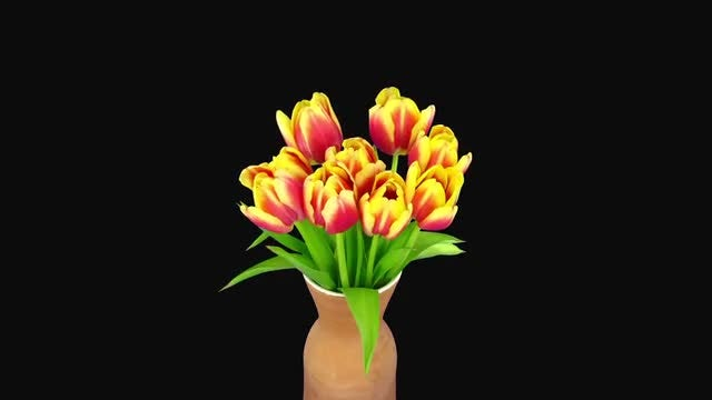 Red-Yellow Tulips In Vase: Stock Video