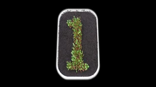 Sprouting Figure 1 From Seeds : Stock Video