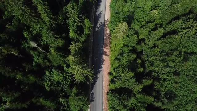 Man Walking On Forest Road: Stock Video