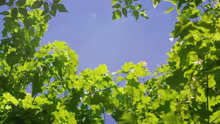 Blue Sky And Summer Garden: Stock Video