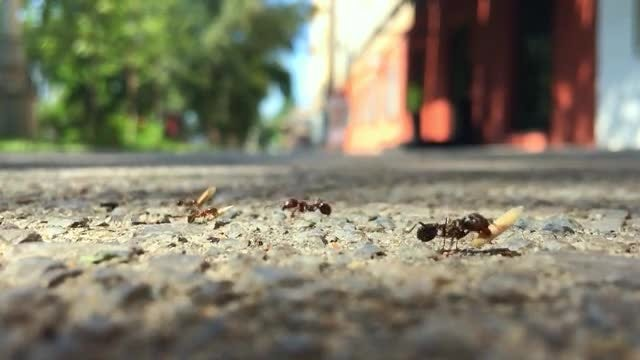 Close-up Shot Of Ants Moving: Stock Video