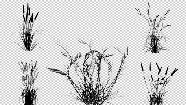 Bushes Of Plants: Stock Motion Graphics