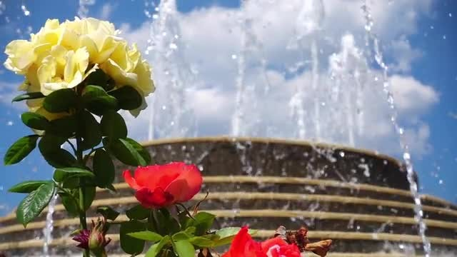Flowers By The Fountain Pool: Stock Video