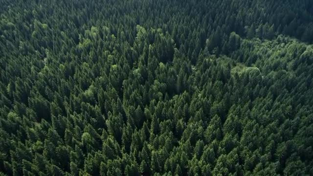 Aerial Shot Of Thick Forest: Stock Video