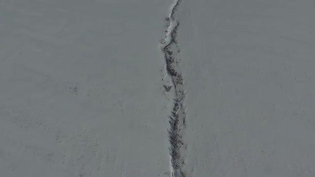 Animal Tracks In The Snow: Stock Video