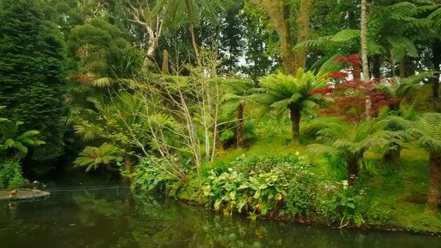 Revealing Shot Of Beautiful Park: Stock Video