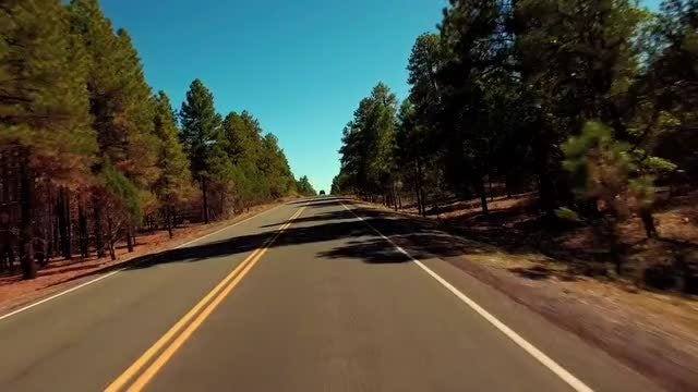 POV Of Open Forest Road: Stock Video