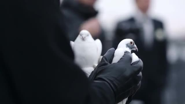 Two Doves Being Held: Stock Video