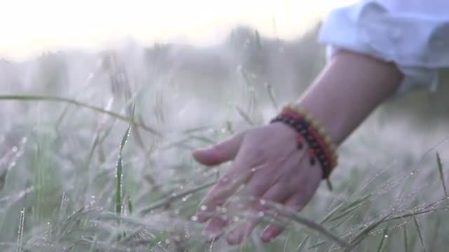 Hand On Tall Grass: Stock Video