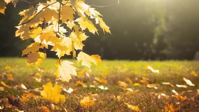 Autumn Garden At Sunset: Stock Video