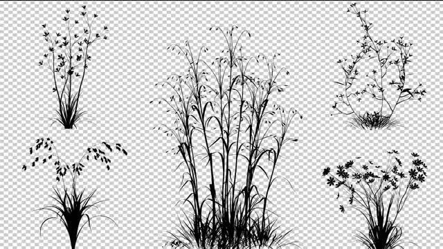 Flowering Shrubs: Stock Motion Graphics