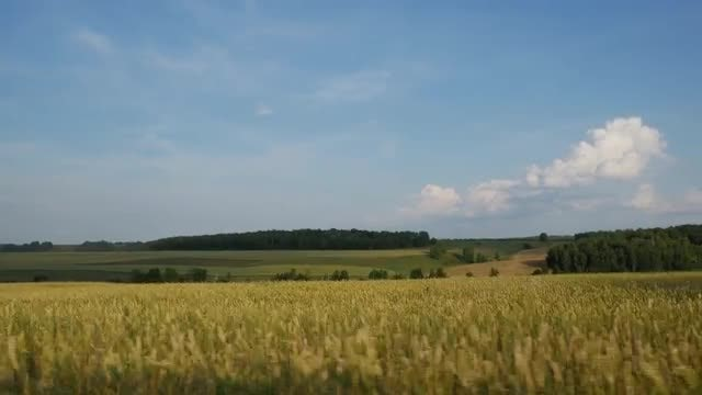 Driving Through Beautiful Field Scenery: Stock Video